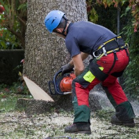 Tree Removal Chiswick
